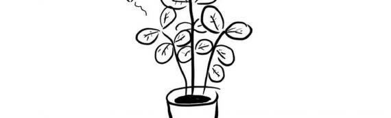 Feng Shui tips | Planten in de huiskamer